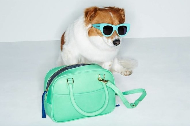 adorable-dogs-for-shopbops-latest-accessories-lookbook-1