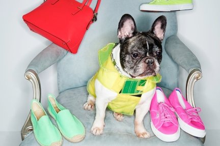 adorable-dogs-for-shopbops-latest-accessories-lookbook