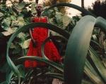 Alexander-McQueen-Spring-Summer-2018-Campaign12278